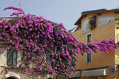 Sirmione, house with bougainvillea, Italy — Stock Photo