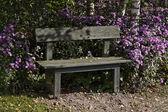 Wooden bench with Michaelmas daisy in autumn — Stock Photo