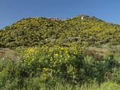 View of the village Costa Rei, Sardinia, Italy — Stock Photo