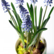 Stock Photo: Closeup of lavender in colorful pot