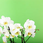 Bouquet Of Fresh Orchids — Stock Photo