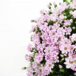 A bouquet of pink flowers — Stockfoto