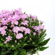 Bouquet of pink flowers — Stock Photo #9733646