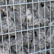 Gray rocks in cage — Stock Photo #9755893
