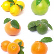 Citrus fruits — Foto de stock #8599823