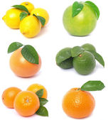 Citrus fruits — Foto de Stock