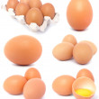 Stock Photo: Eggs collection