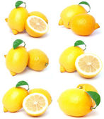 Lemon fruits — Stock Photo