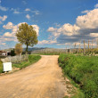 Rural road under cloudy sky. Piedmont, Italy. — Stock Photo