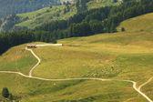 Aerial view on alpine pasture. — Stock Photo