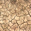 The dried up cracked earth — Foto Stock