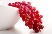 White bowl with freshly picked red currant — Stock Photo