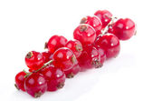 Freshly picked red currant — Stock Photo