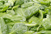 Young fresh spinach — Stock Photo