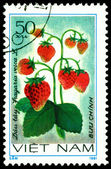 Vintage postage stamp. Strawberry. Fragaria vesca L. — Stock Photo