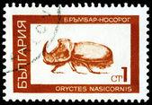Vintage frimärke. rhinoceros beetle. — Stockfoto