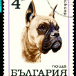Vintage postage stamp. Boxer. — Stock Photo