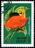 Vintage postage stamp. Flower Anthurium Shercera. — Stock Photo