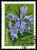 Vintage postage stamp. Flower Vanda Orchid. — Stock Photo