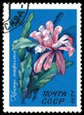 Vintage postage stamp. Flowering grab cactus. — Stock Photo