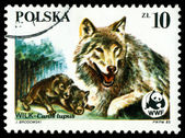 Vintage postage stamp. Wolfs Canis Lupus. — Stock Photo