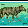 Vintage  postage stamp. Wolfs  Canis Lupus. B. - Stock Photo