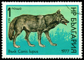 Vintage postage stamp. Wolfs Canis Lupus. B. — Stock Photo