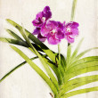 ������, ������: Watercolored orchid