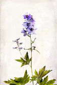 Watercolored delphinium — Stock Photo