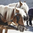 Carriage horses — Stock Photo