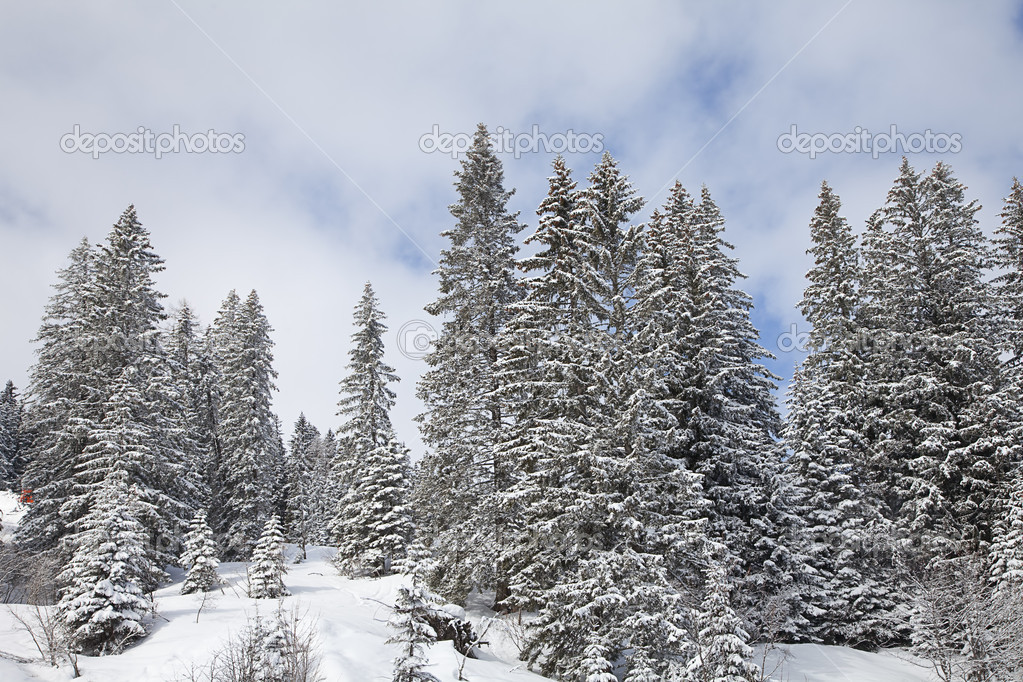 Winter landscape with spruce trees covered by snow — Stock Photo #9930129