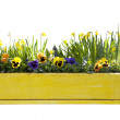 Yellow flowerpot with daffodils - Stock Photo