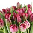 Tulips Bouquet — Stock Photo #10158304