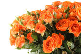Kytice růží — Stock fotografie