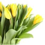 Tulips Bouquet — Stock Photo #8829930