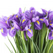 Bouquet of irises — Stock Photo