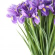 Bouquet of irises — Stock Photo #8871127