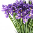 Bouquet of irises — Stock Photo #9056989