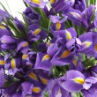 Irises — Stock Photo #9057088