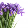 Irises — Stock Photo #9467672