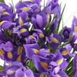 Beautiful of irises — Stockfoto #9630702