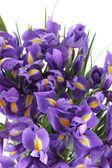 Beautiful of irises — Stock Photo