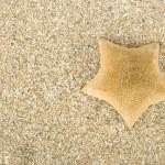 Starfish on sand — Stock Photo #9732393