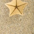 Starfish on sand — Stock Photo #9806698