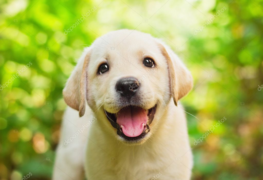 природа белая собака животное улыбка  № 1423880 бесплатно