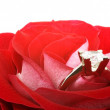 Red rose with diamond ring - Stock Photo