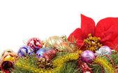Poinsettias decor — Stock Photo