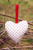 Hanging heart on grape branch — Stock Photo