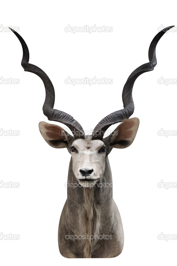 Antelope over white background — Stock Photo #10107775
