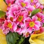Flowers — Stock Photo #9371845
